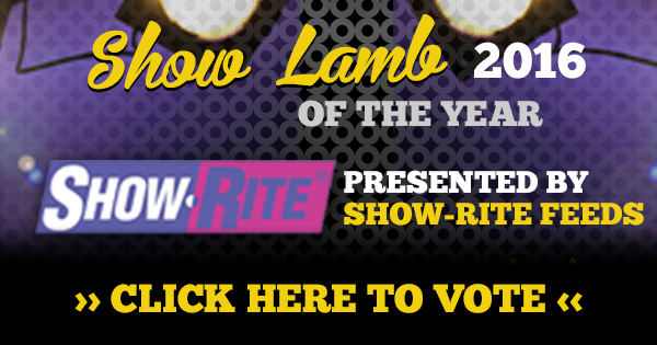 Vote for Show Lamb of the Year