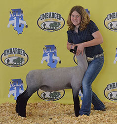 Illinois Jackpot Sheep Show Results